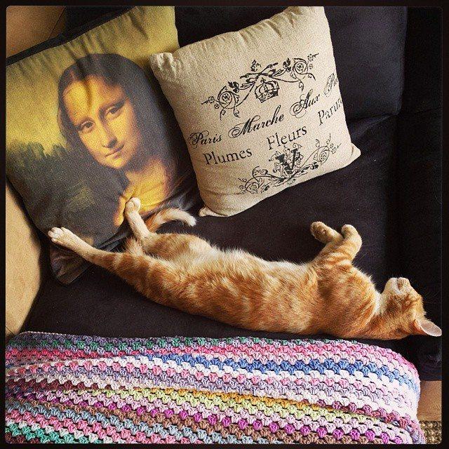 hookybren crochet cat