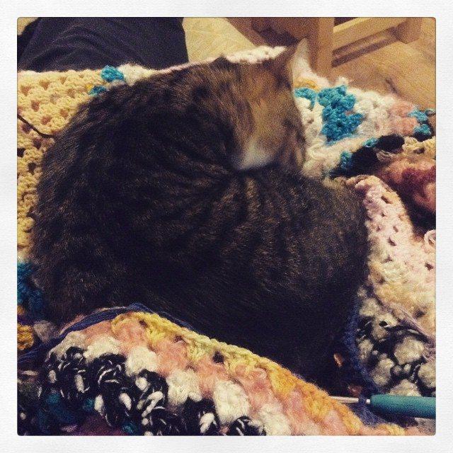 silvery_cloud kitty on crochet