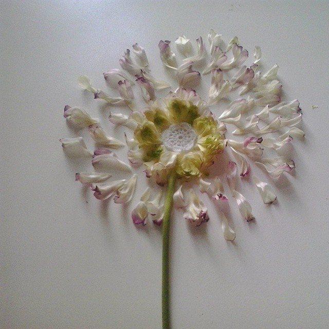 babagabaa flower crochet