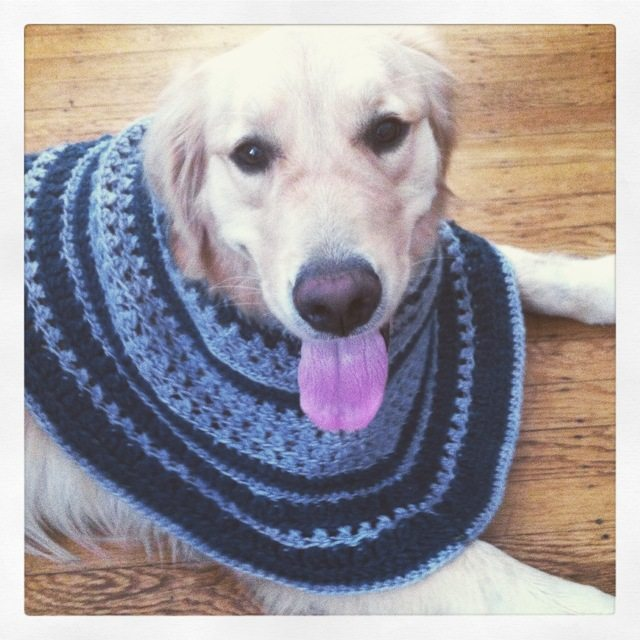 crochet puppy cowl