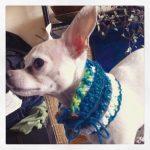 miso crochet puppy cowl