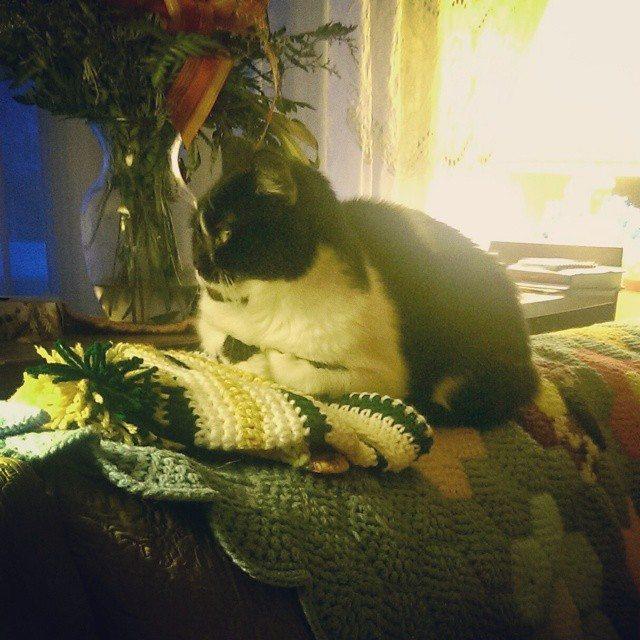 mlissabethgr crochet kitty