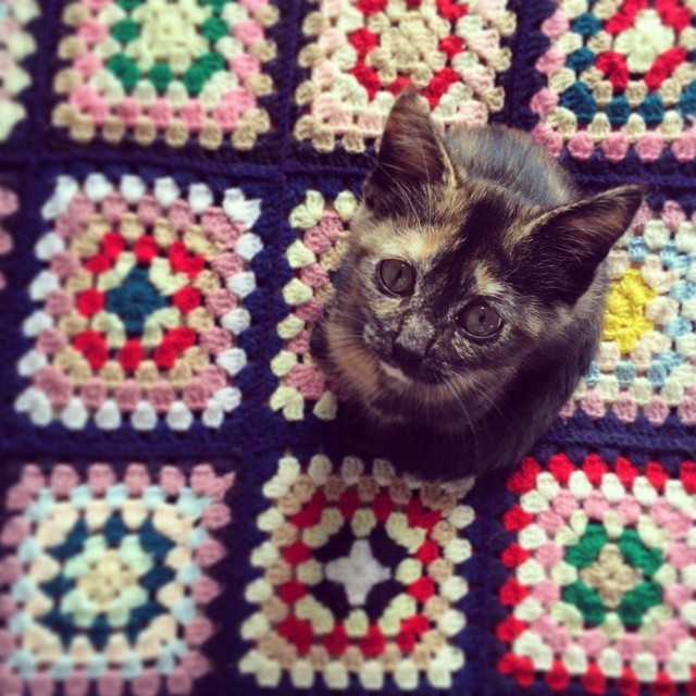 stelcrochet kitty on crochet granny squares