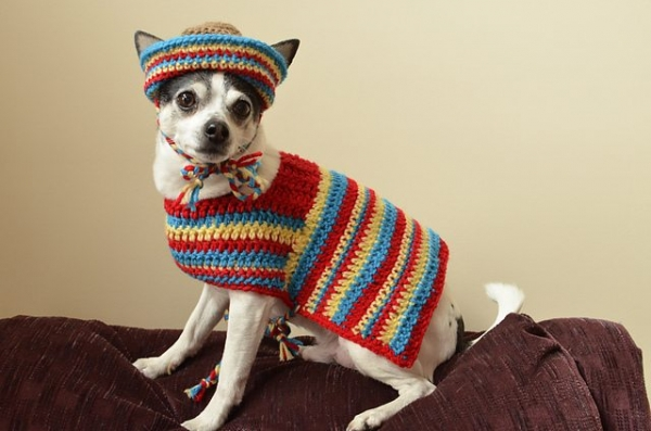 crochet dog sombrero
