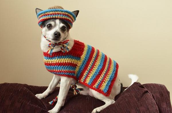 crochet dog sombrero