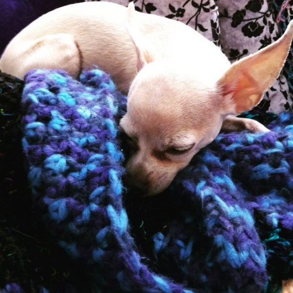 puppy with crochet