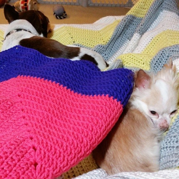 thegirllovesyarn crochet dogs