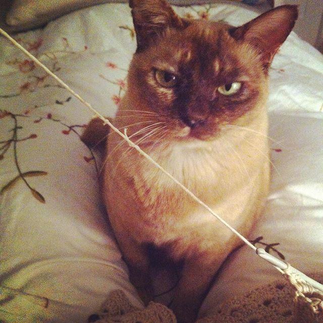 ponytales_ yarn and kitty