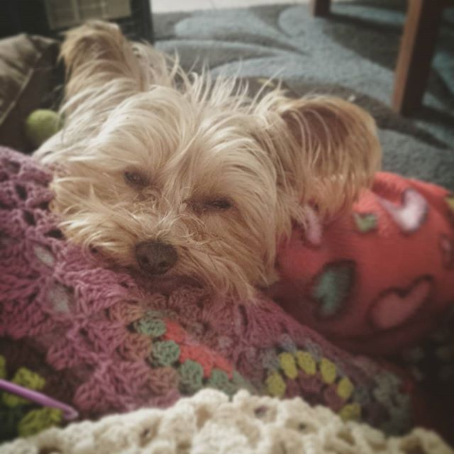 hookybren sleepy puppy on crochet