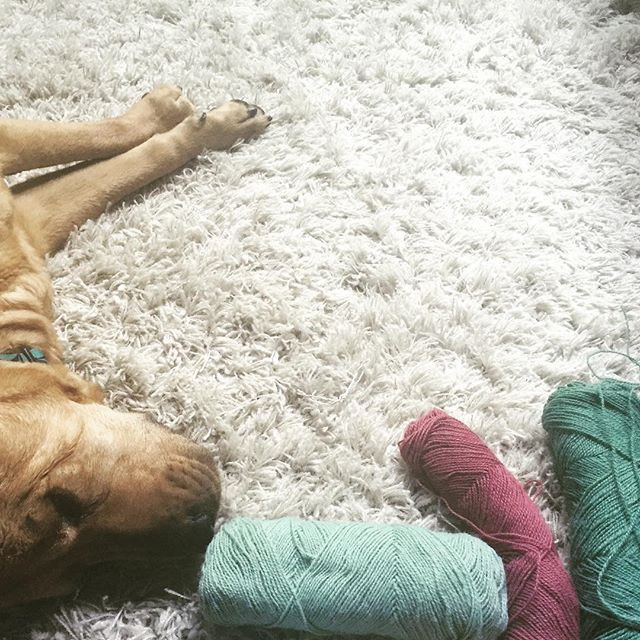 riley dog with yarn