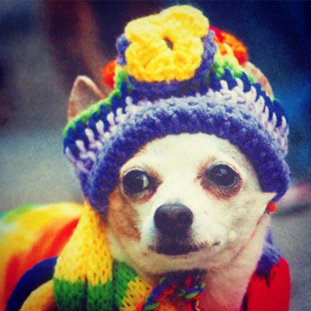 spca crochet puppy