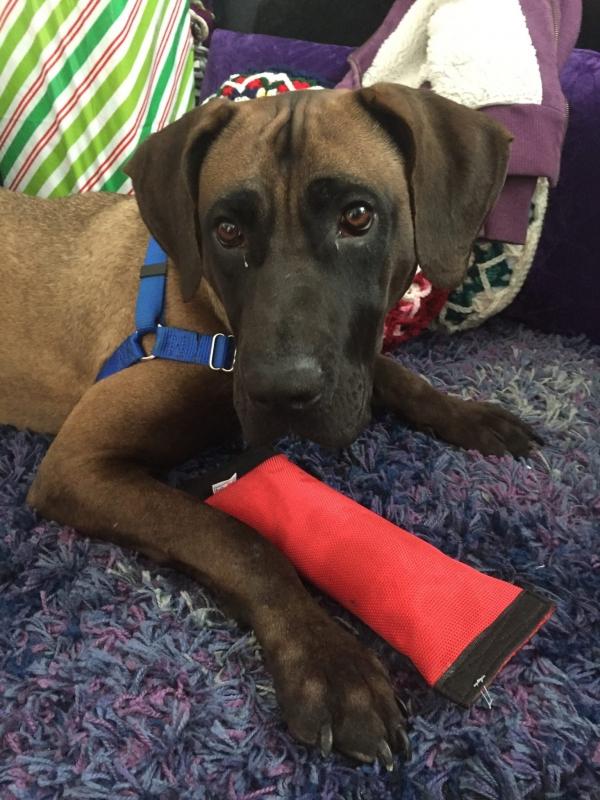 katara rescue dog