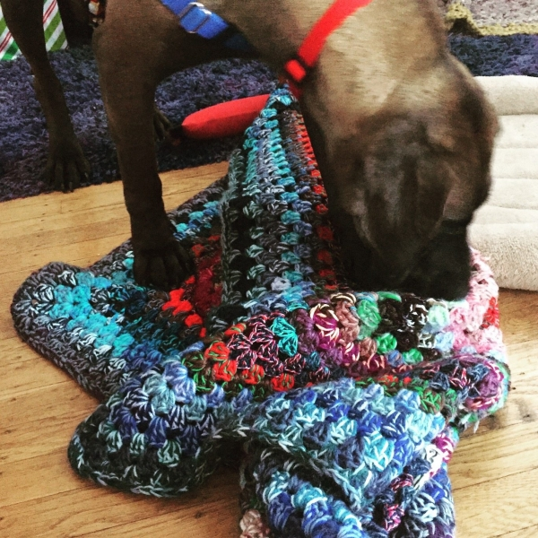 rescue dog katara with crochet blanket