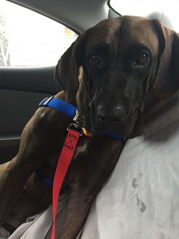 rescue dog katara