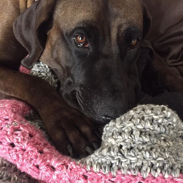 dog on crochet granny blanket