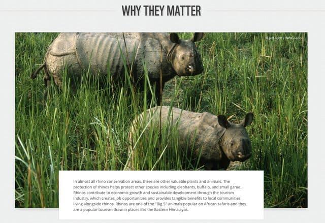 why rhino matters