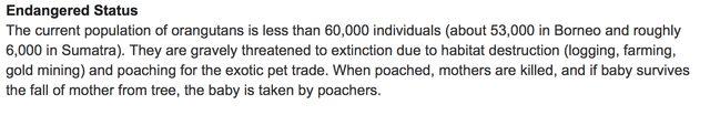 orangutan endangered species facts